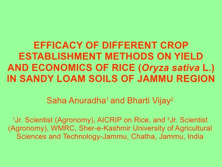 EFFICACY OF DIFFERENT CROP ESTABLISHMENT METHODS ON YIELD AND ECONOMICS OF RICE ( Oryza sativa  L.) IN SANDY LOAM SOILS OF...