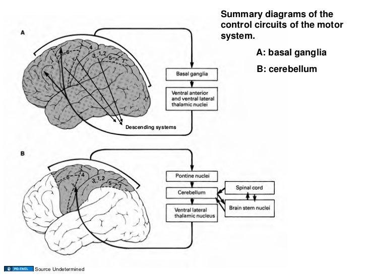 03.17.09(b): Basal Ganglia