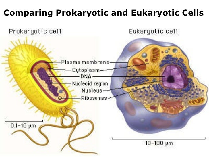 03 6 kingdoms prokaryote eukaryote – 6 Kingdoms Worksheet