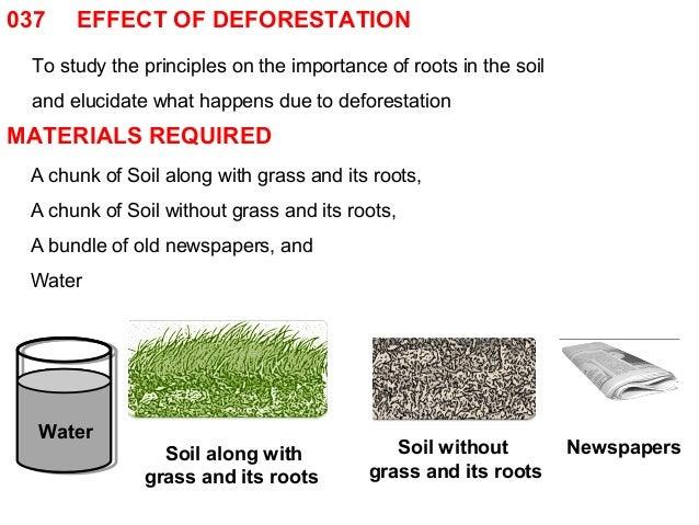 037 effect of deforestation