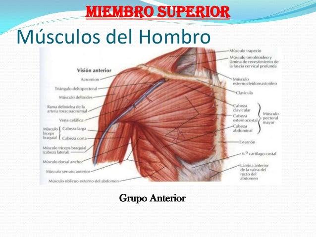 03 anatomia humana ms y mi corregida