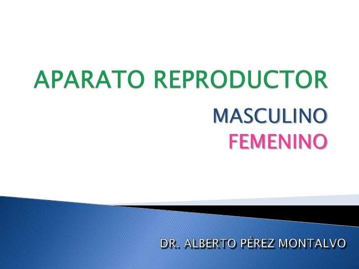 APARATO REPRODUCTOR<br />MASCULINO<br />FEMENINO<br />DR. ALBERTO PÉREZ MONTALVO<br />