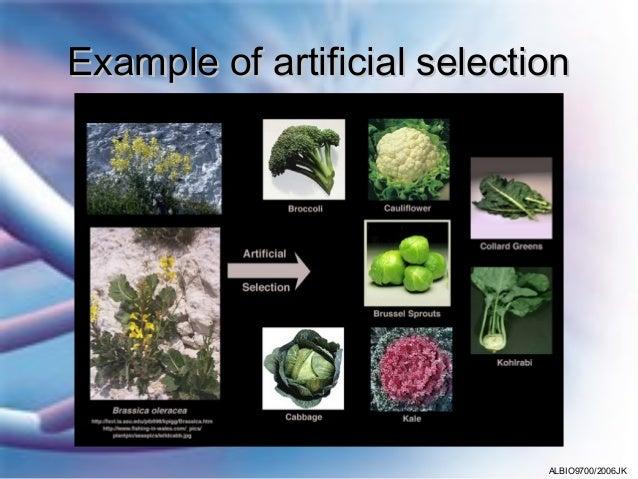 03 Artificial Selection