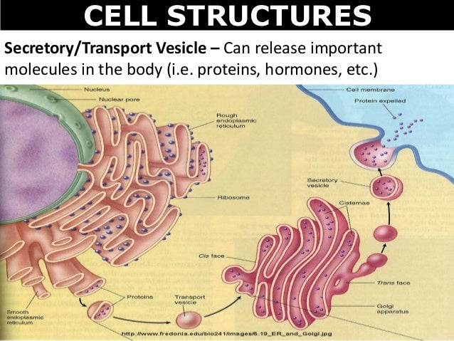 03 cell structures