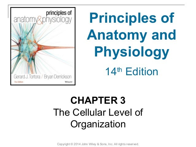 03 [chapter 3 the cellular level of organization]