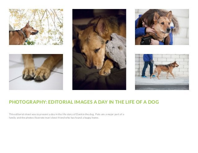 PHOTOGRAPHY: EDITORIAL IMAGES A DAY IN THE LIFE OF A DOG This editorial shoot was to present a day in the life story of Du...