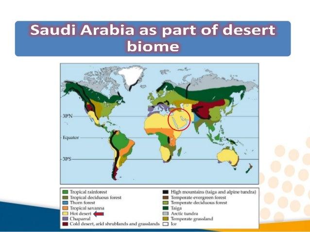 03 Desert Biome