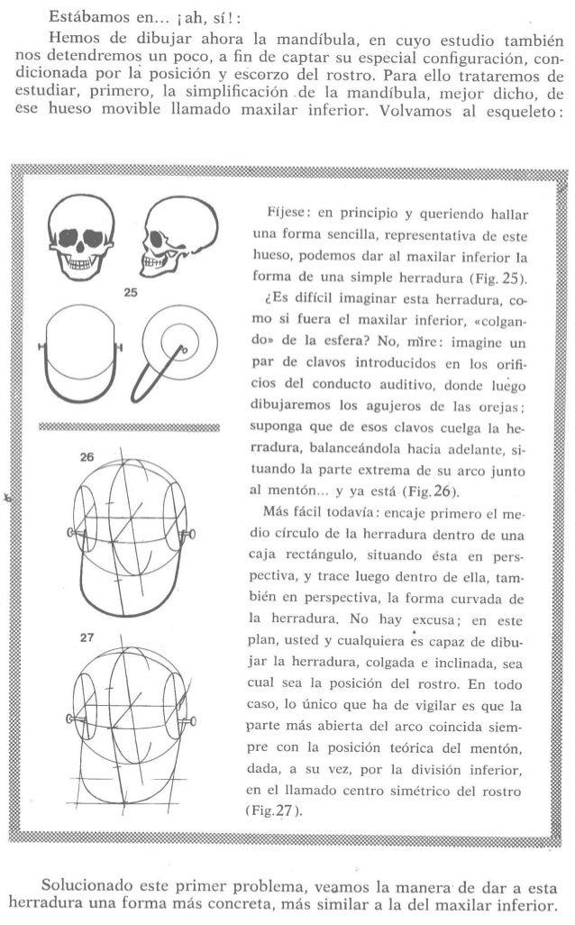 Estábamos en. .. ¡ah,  sí!  :  Hemos de dibujar ahora la mandíbula,  en cuyo estudio también nos detendremos un poco,  a fi...