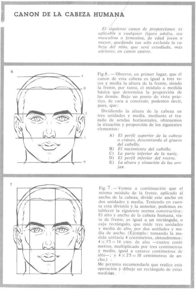 CANON DE LA CABEZA ¡{visitar-IA  /   El siguiente canon de proporciones es aplicable a cualquier figura adulta,  sea mascu...