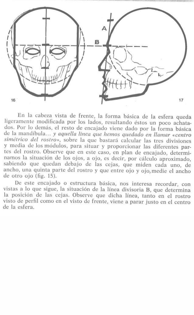 17  En la cabeza vista de frente,  la forma básica de la esfera queda ligeramente modificada por los lados,  resultando ést...