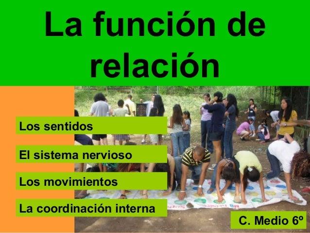La función derelaciónLos sentidosEl sistema nerviosoLos movimientosLa coordinación internaC. Medio 6º