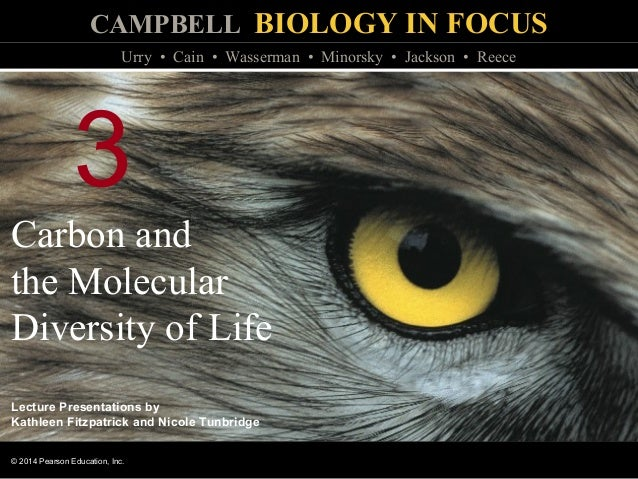 Biology In Focus Chapter 3