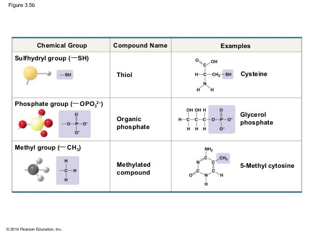 Sulfhydryl Group Examples Biology in Focu...