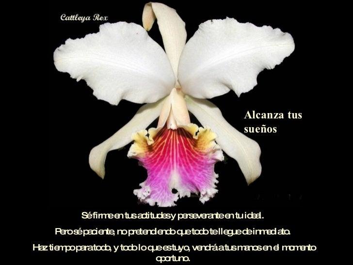 03 Orquideasdemoyobamba Slide 2