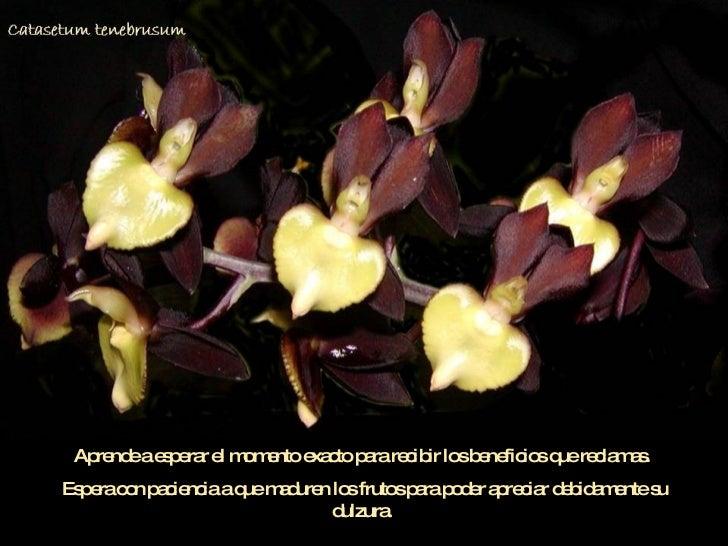 03 Orquideasdemoyobamba Slide 3