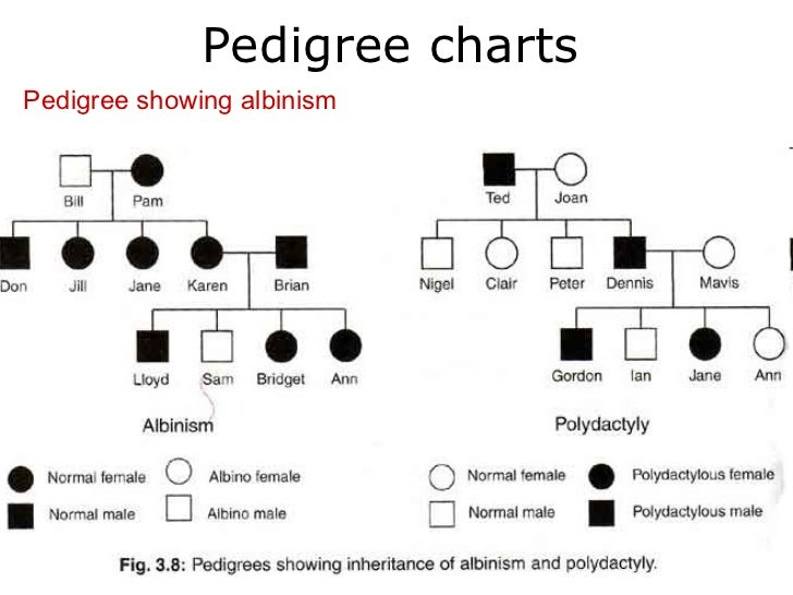 Pictures Pedigree Charts Worksheet Getadating – Biology Pedigree Worksheet