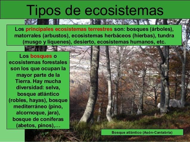 Protecci n del medio ambiente for Cuales son los tipos de arboles