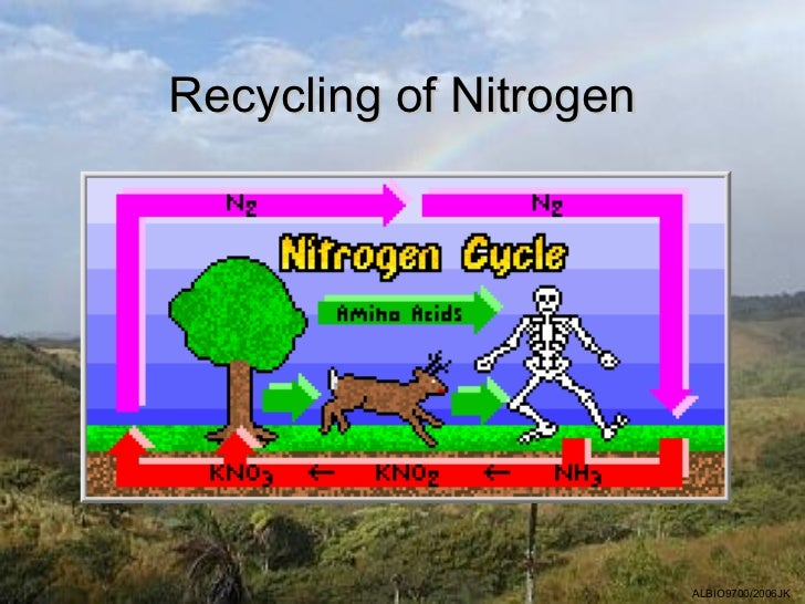 Recycling of Nitrogen                        ALBIO9700/2006JK