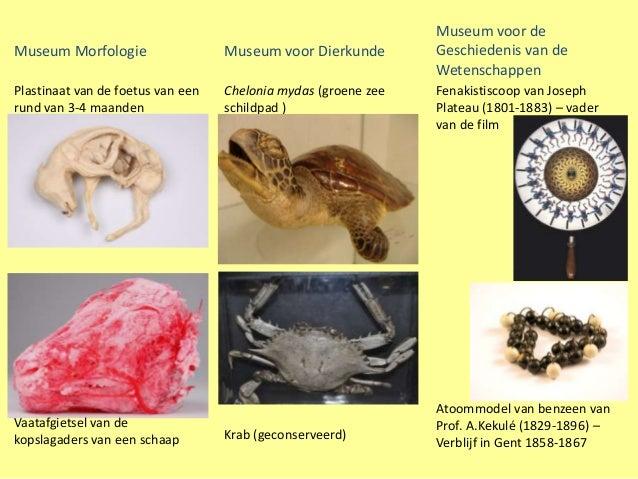 Museum voor deMuseum Morfologie                  Museum voor Dierkunde        Geschiedenis van de                         ...
