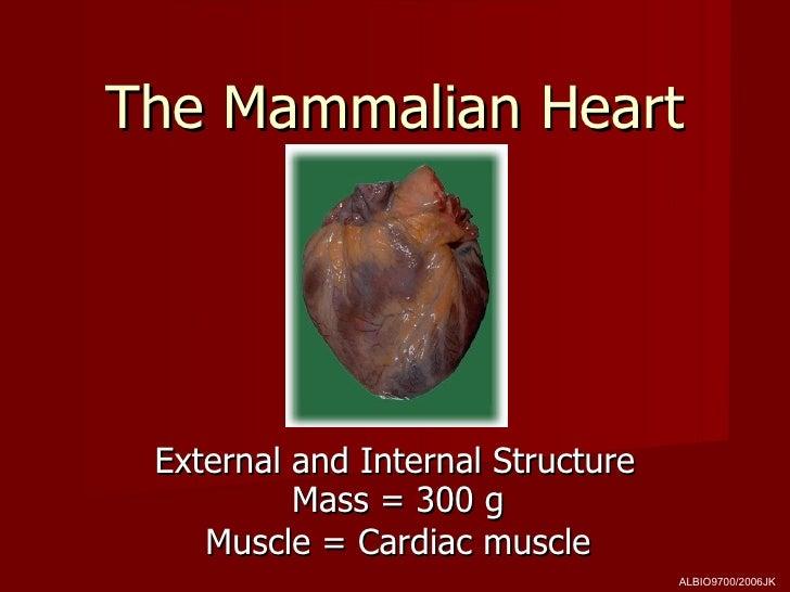 The Mammalian Heart External and Internal Structure          Mass = 300 g    Muscle = Cardiac muscle                      ...