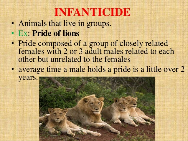 Sexual selection lions