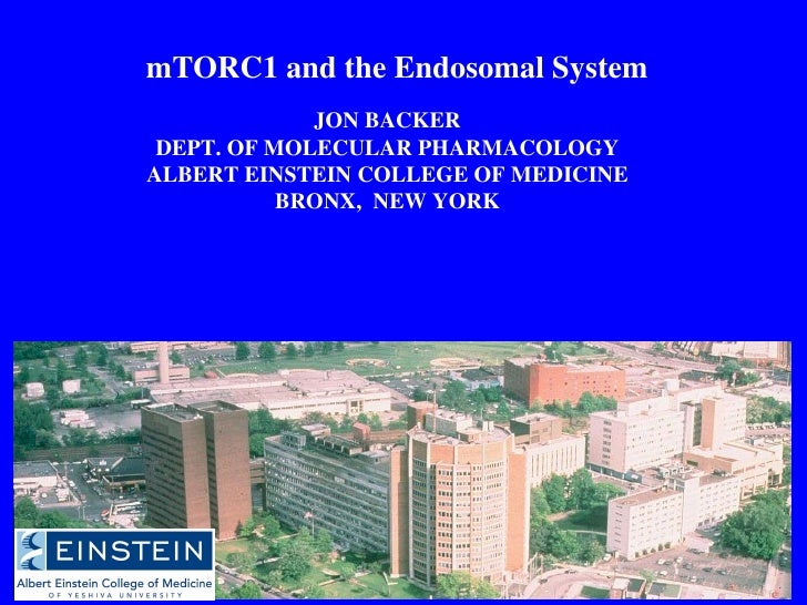 mTORC1 and the Endosomal System JON BACKER DEPT. OF MOLECULAR PHARMACOLOGY ALBERT EINSTEIN COLLEGE OF MEDICINE BRONX,  NEW...