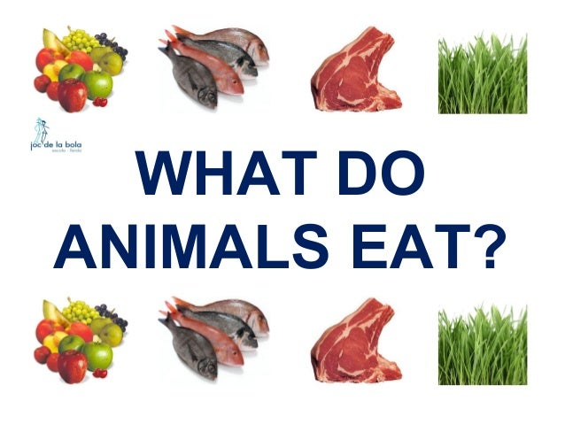 WHAT DO ANIMALS EAT?
