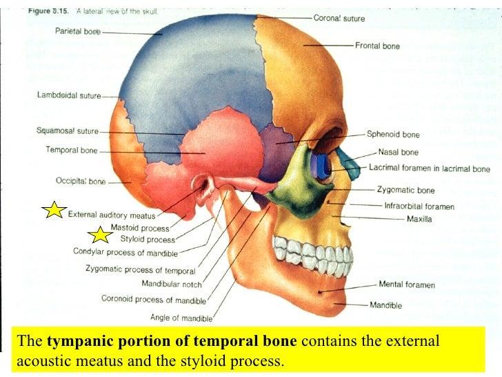 external view brain diagram