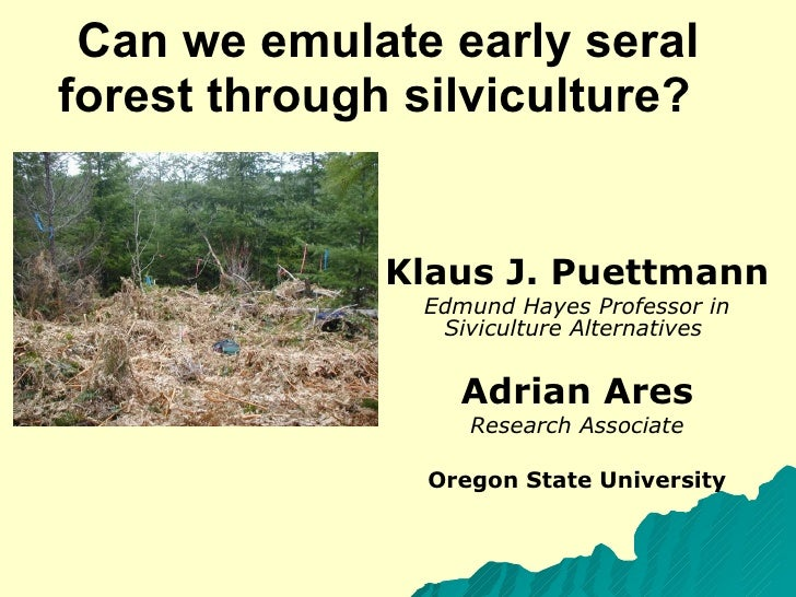 Can we emulate early seral forest through silviculture?  Klaus J. Puettmann Edmund Hayes Professor in Siviculture Alternat...