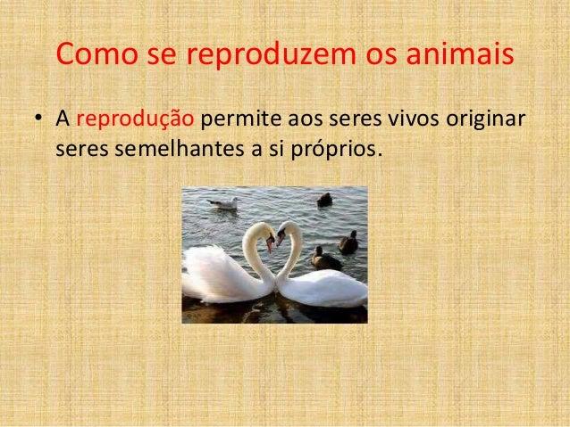 Como se reproduzem os animais • A reprodução permite aos seres vivos originar seres semelhantes a si próprios.