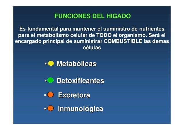 04- Higado (bilis y bilirrubina)