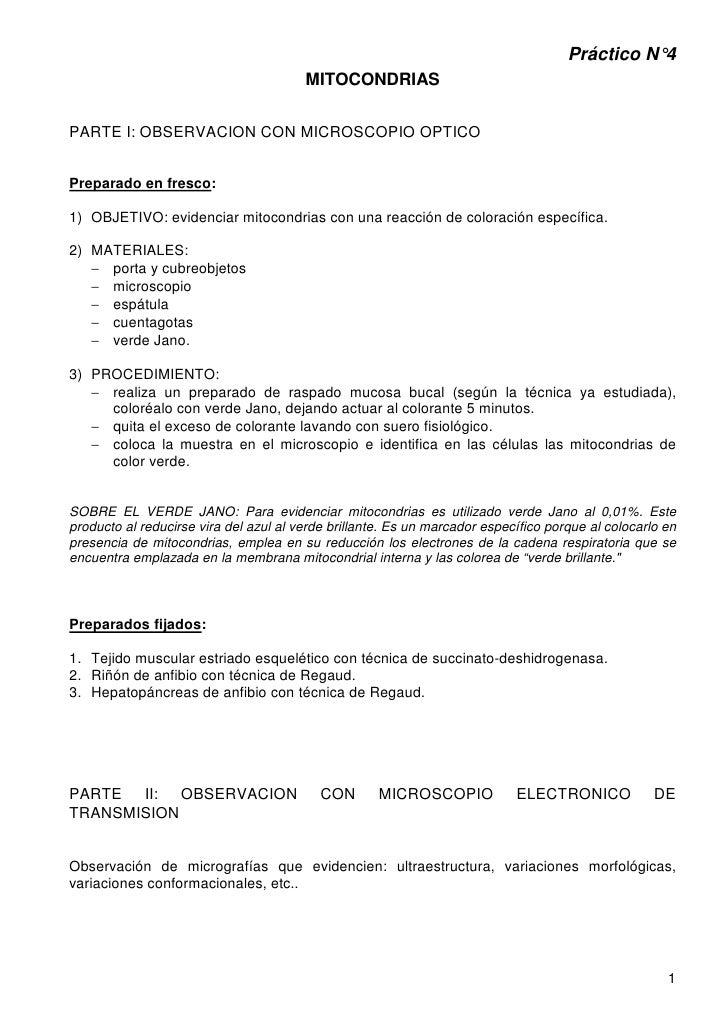 Práctico N°4                                        MITOCONDRIASPARTE I: OBSERVACION CON MICROSCOPIO OPTICOPreparado en fr...