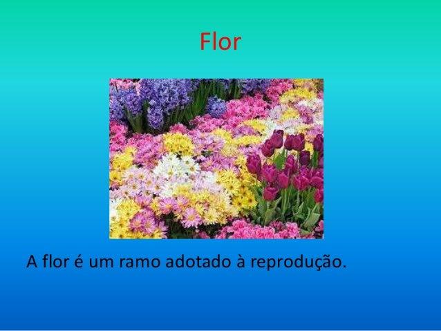 Flor  A flor é um ramo adotado à reprodução.