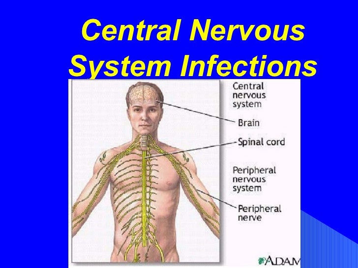 Central Nervous System Infections