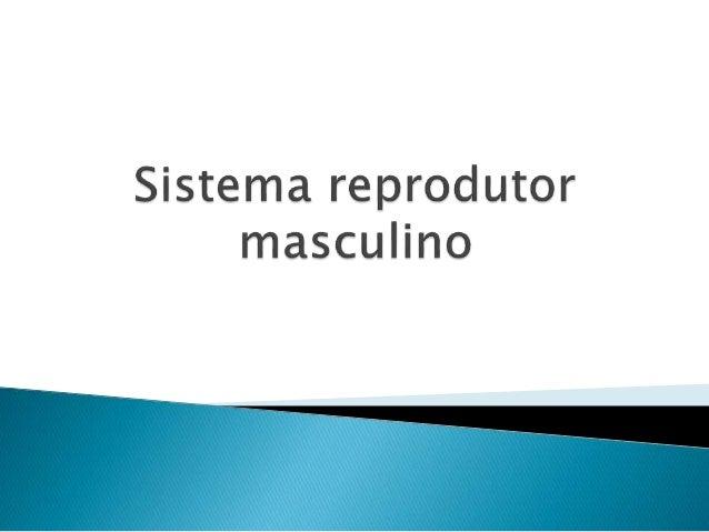         O pênis é o órgão muscular encarregado de depositar os espermatozóides no interior da vagina. Compreende grand...