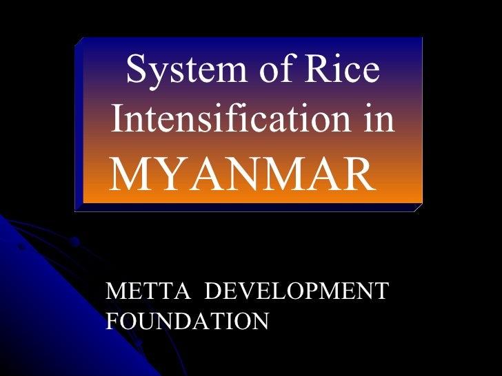 System of Rice Intensification in  MYANMAR   METTA  DEVELOPMENT FOUNDATION