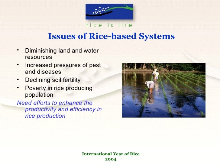 the importance and production of rice Production technology of rice economic importance: rice is principal food crop of nearly half of the world's populationit occupies an important.