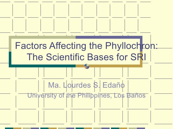 Factors Affecting the Phyllochron: The Scientific Bases for SRI Ma. Lourdes S. Edaño University of the Philippines, Los Ba...