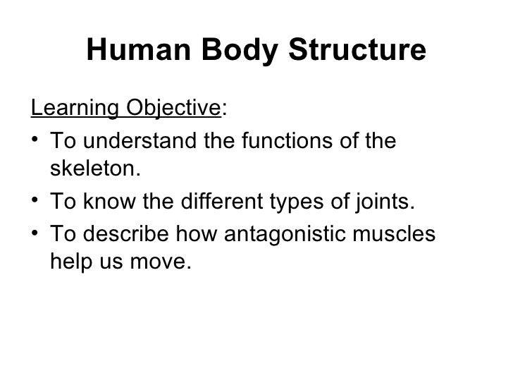 Human Body Structure <ul><li>Learning Objective : </li></ul><ul><li>To understand the functions of the skeleton. </li></ul...