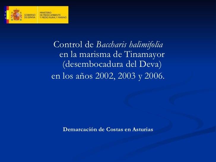 <ul><li>Control de  Baccharis halimifolia en la marisma de Tinamayor (desembocadura del Deva) </li></ul><ul><li>en los año...