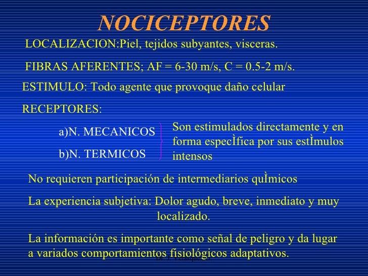 NOCICEPTORES Dr. J. Velásquez G. ESTIMULO: Todo agente que provoque daño celular RECEPTORES: a)N. MECANICOS b)N. TERMICOS ...