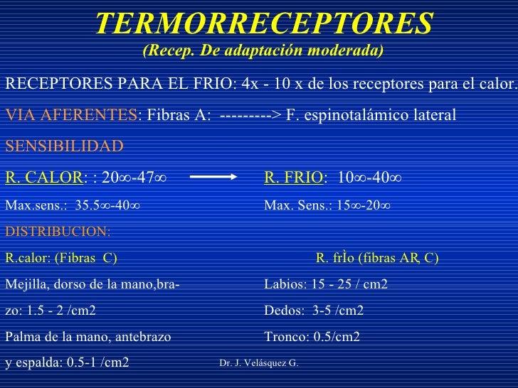 TERMORRECEPTORES (Recep. De adaptación moderada) Dr. J. Velásquez G. RECEPTORES PARA EL FRIO: 4x - 10 x de los receptores ...