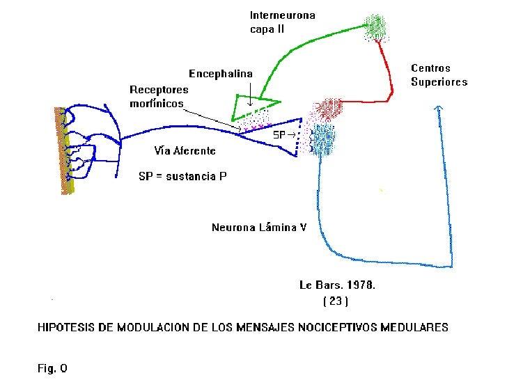 Dr. J. Velásquez G.