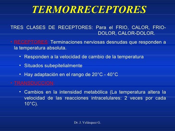 TERMORRECEPTORES Dr. J. Velásquez G. <ul><li>TRES CLASES DE RECEPTORES: Para el FRIO, CALOR, FRIO- DOLOR, CALOR-DOLOR. </l...