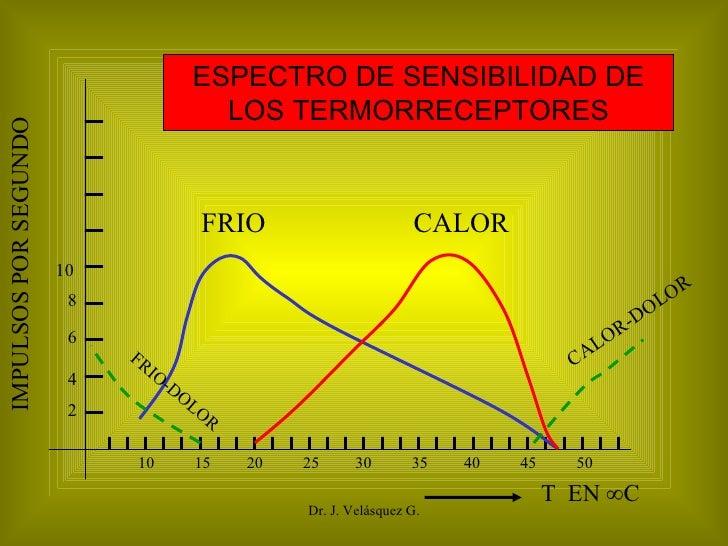 Dr. J. Velásquez G. 10  15  20  25  30  35  40  45  50  FRIO CALOR CALOR-DOLOR FRIO-DOLOR T  EN °C  IMPULSOS POR SEGUNDO 2...
