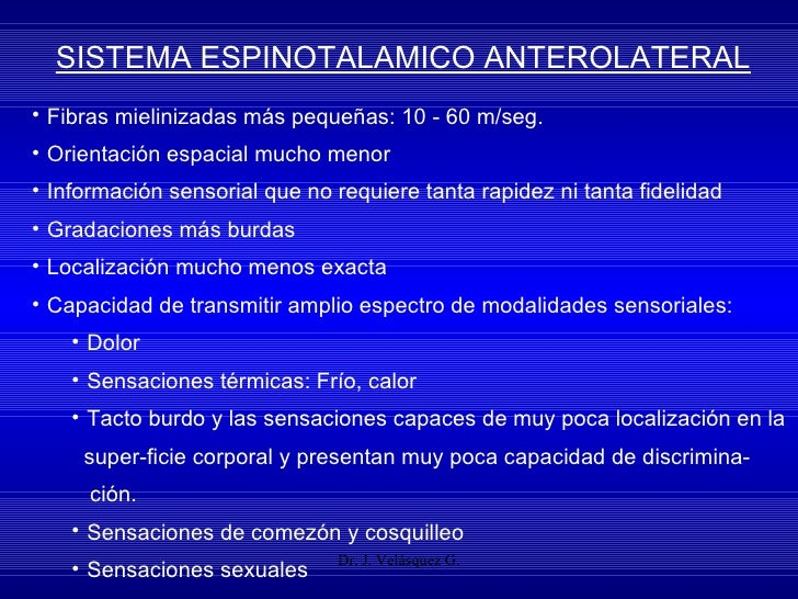 Dr. J. Velásquez G. SISTEMA ESPINOTALAMICO ANTEROLATERAL <ul><li>Fibras mielinizadas más pequeñas: 10 - 60 m/seg. </li></u...