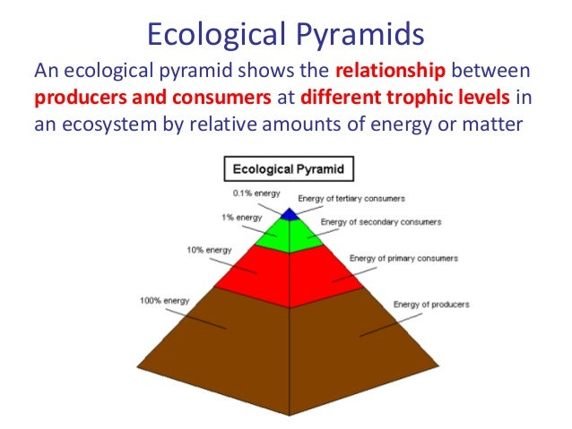 04 Energy Flow In Ecosystems