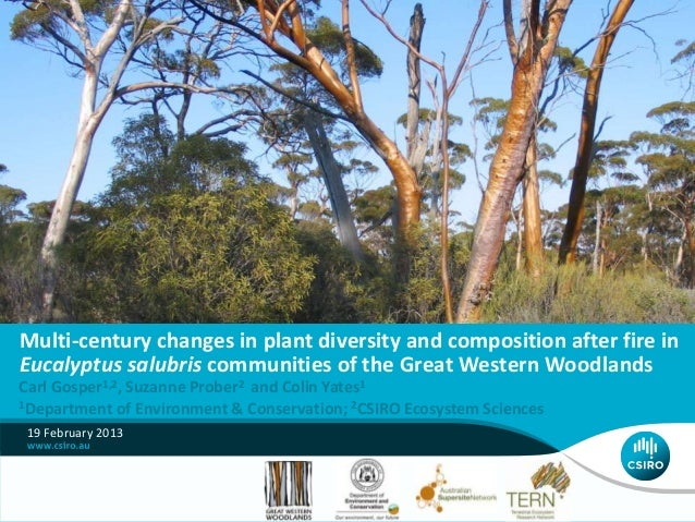 Multi-century changes in plant diversity and composition after fire inEucalyptus salubris communities of the Great Western...