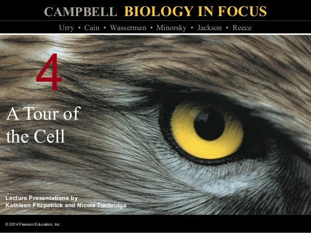CAMPBELL BIOLOGY IN FOCUS © 2014 Pearson Education, Inc. Urry • Cain • Wasserman • Minorsky • Jackson • Reece Lecture Pres...