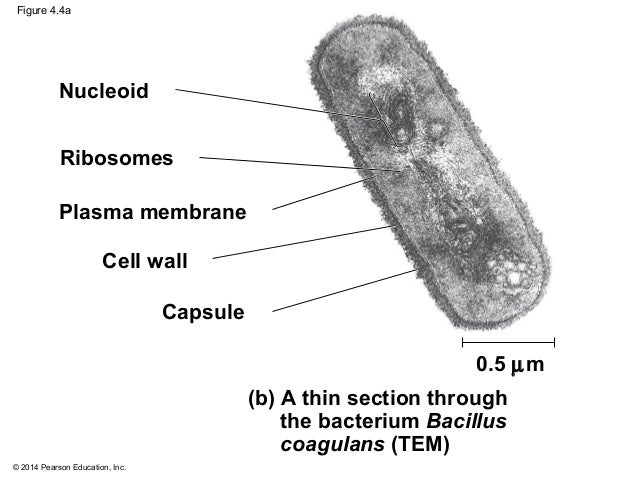 Biology in Focus Chapter 4